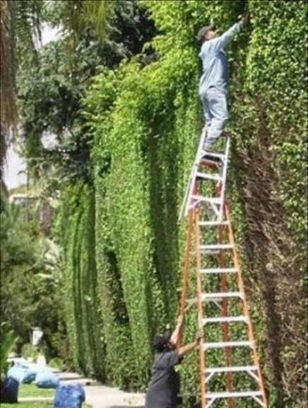 Tall Hedge Get Domain Pictures