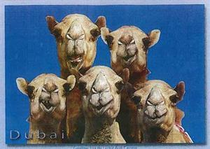 Paul maddison 39 s postcard from dubai online news building for Ec harris dubai